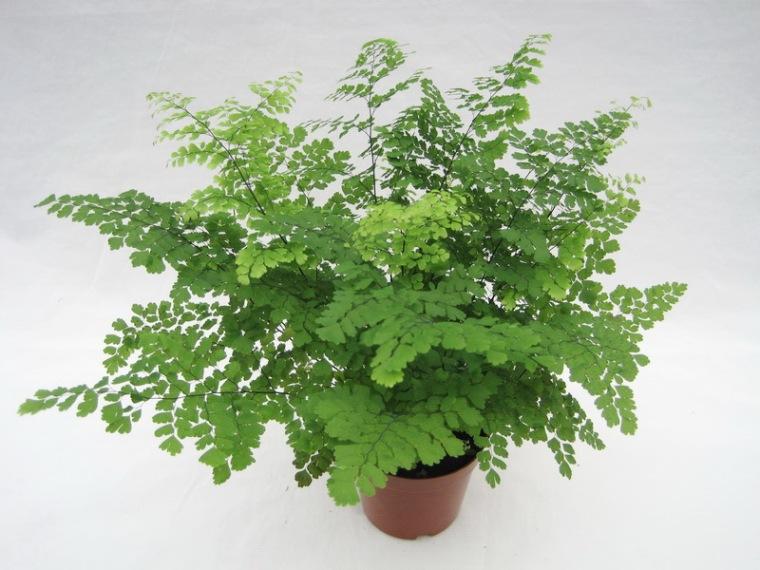 常见室内植物养殖方法