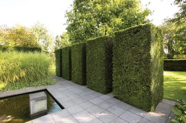 园林设计中的经典元素——树篱