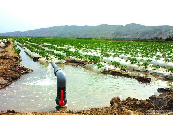 """农业灌溉耗水惊人 部分产区一吨水""""换""""一斤粮?"""