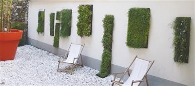 盆栽新玩法 植物爬上墙