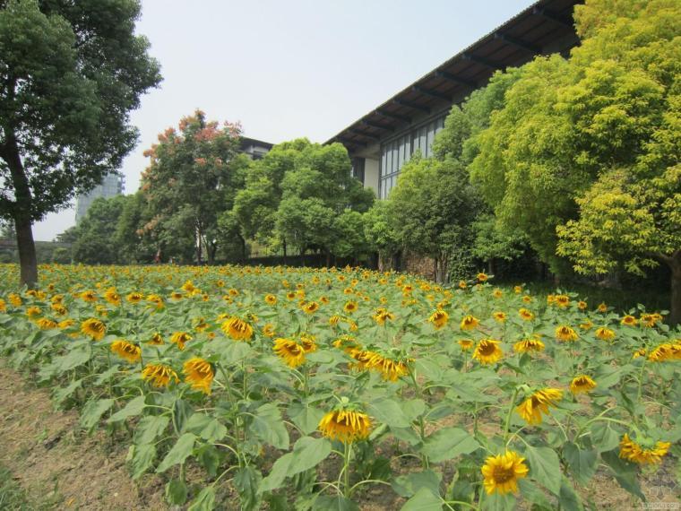 中国美院象山校区,很棒很美的学校