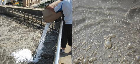 生活污水处理工艺生物膜的有效培养方法