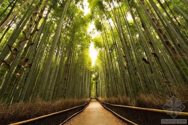 10个清幽静谧的日本庭园