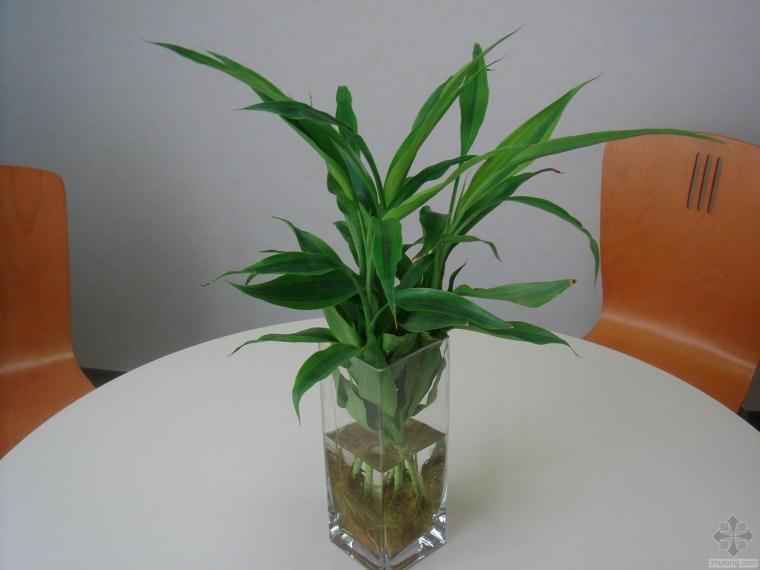 那些植物适合在室内养资料下载-那些年适合在办公室养殖的水培植物