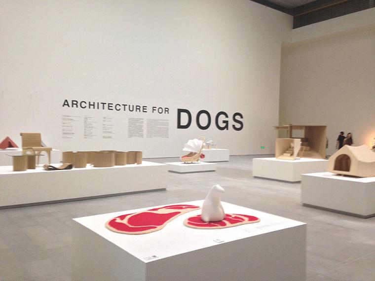 狗到底会想要怎样的房子?知名建筑师做了 12 组
