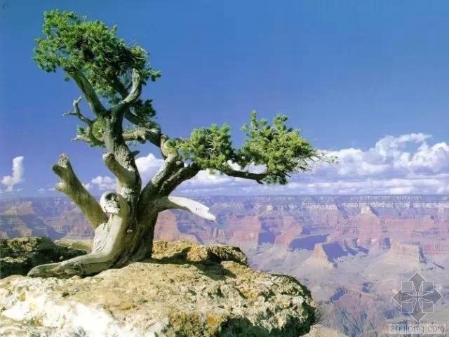 """你植物配置时心中有""""树""""吗?"""