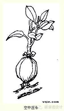 作为园林人  你知道的花卉基本知识点吗?
