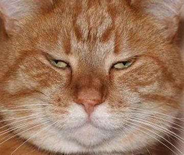 据说这是施工单位人员表情图(猫咪版),莫名戳中笑点!