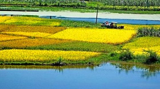 高标准农田水利工程建设5大建议
