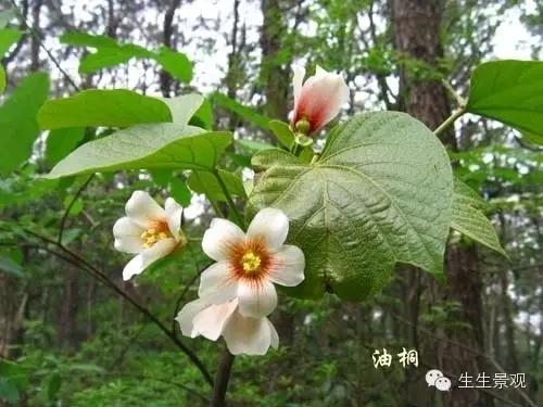 上百种植物图片荟萃,园林人一定要认植物!