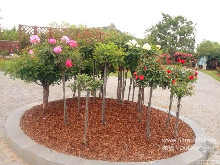 景观覆盖与植物配置的关系