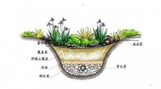 雨水花园到底是什么?该如何掌握?