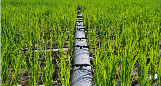 简析节水滴灌系统中的八大错误做法