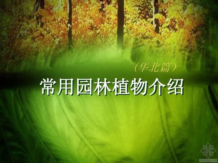 华北常用园林植物数十张图例