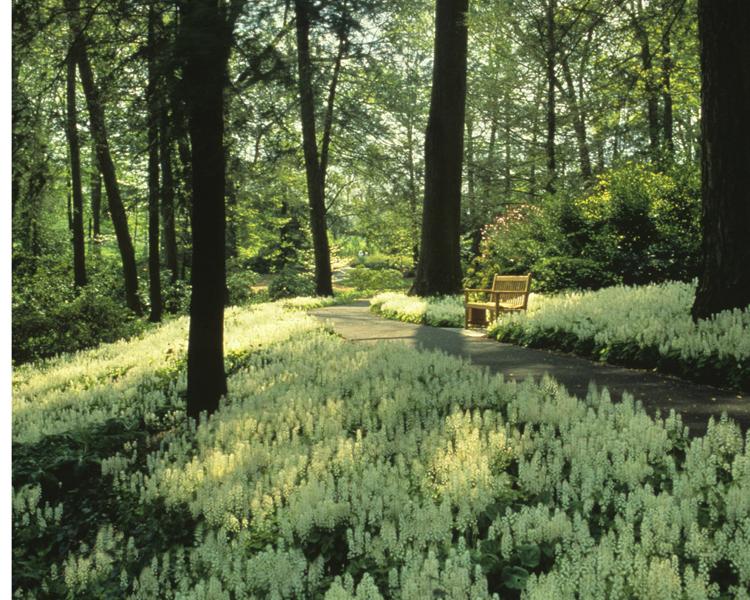 Peirce's Woods at Longwood Gardens, Kennett Square第6张图片