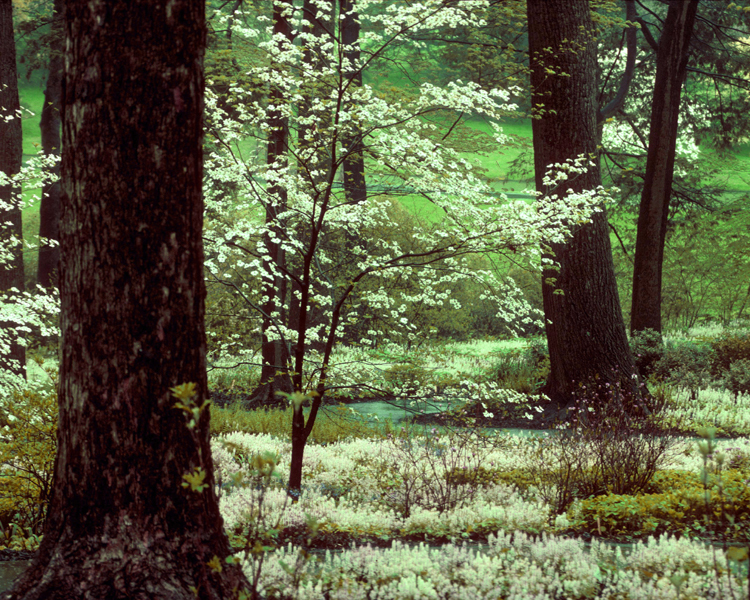 Peirce's Woods at Longwood Gardens, Kennett Square第9张图片