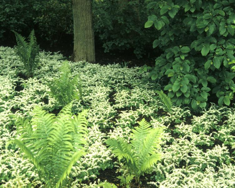 Peirce's Woods at Longwood Gardens, Kennett Square第13张图片