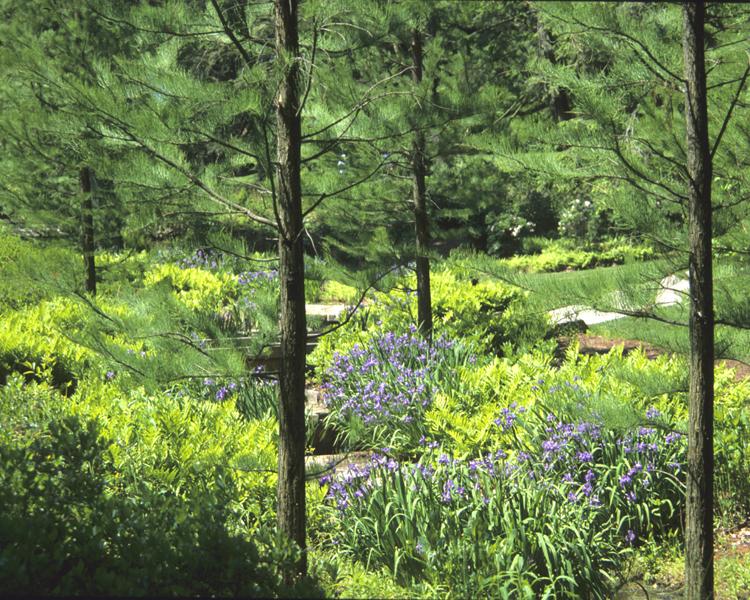 Peirce's Woods at Longwood Gardens, Kennett Square第14张图片