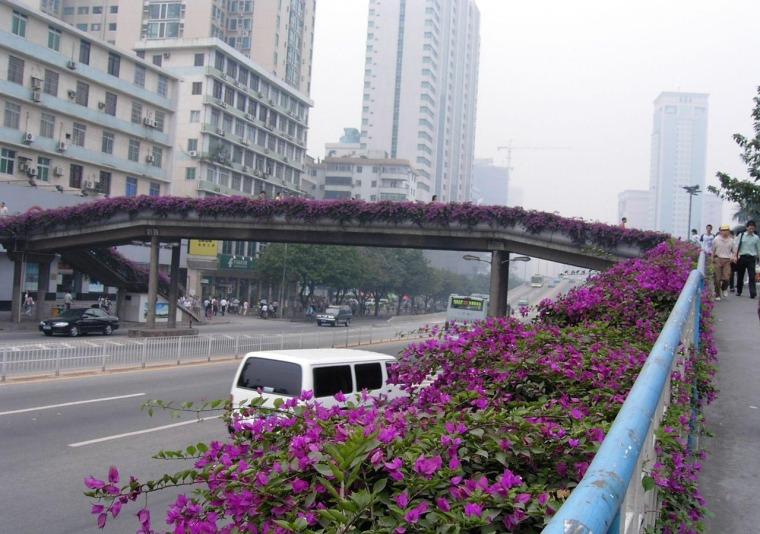 广州人行天桥绿化景观