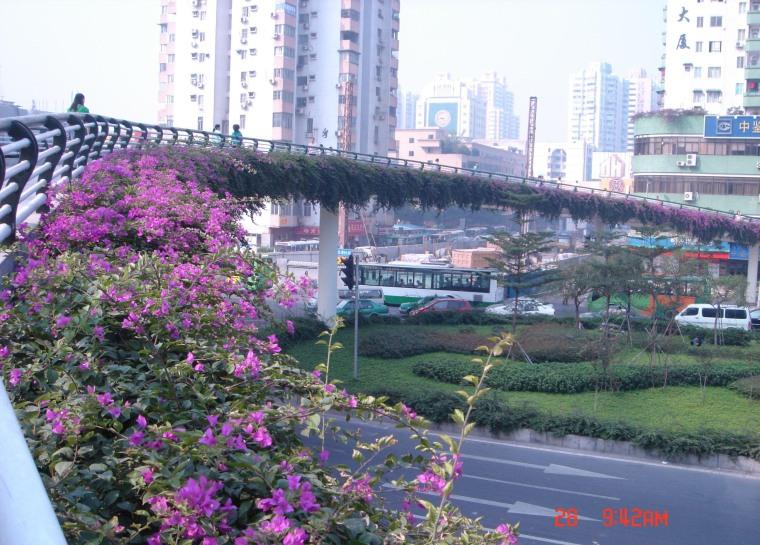 广州人行天桥绿化景观001