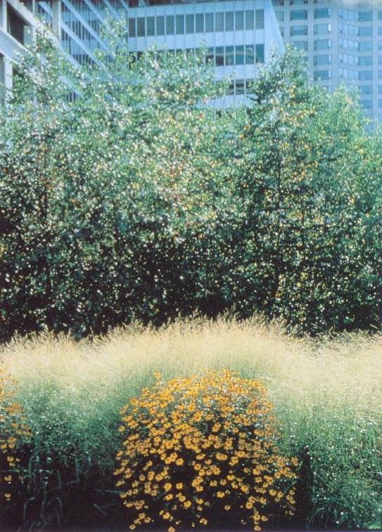 肯·史密斯景观设计事务所(KenSmithLandscapeArchifecf)-肯·史密斯景观设计事务所(Ken Smith Landscape Archifecf)第6张图片