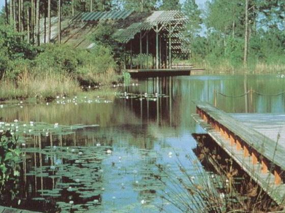 克劳斯比植物园(Crosby Arboretum)