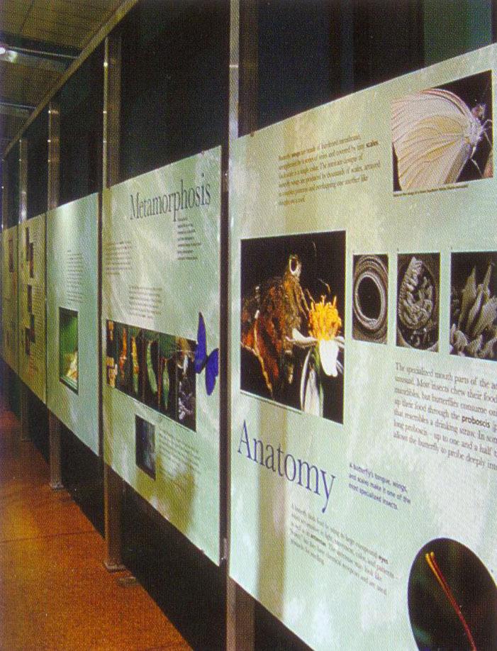 美国自然历史博物馆蝴蝶馆(Butterfly Vivarium American Museum of Natural History)第3张图片