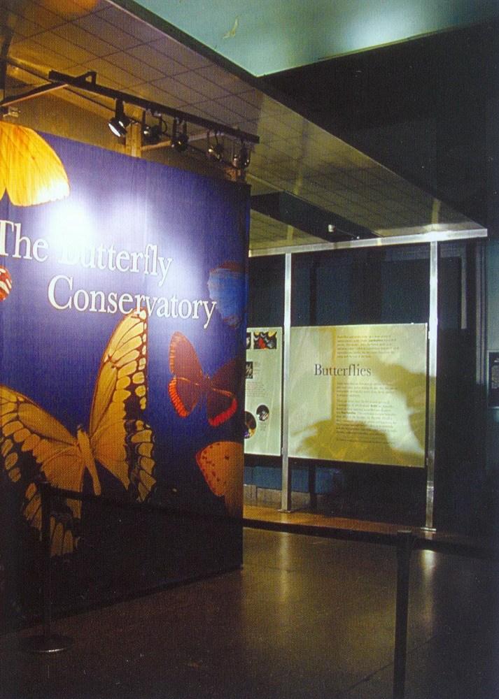 美国自然历史博物馆蝴蝶馆(Butterfly Vivarium American Museum of Natural History)第7张图片