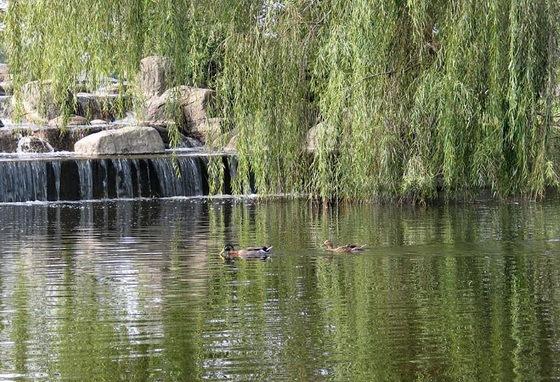 拉弗尼公园第8张图片