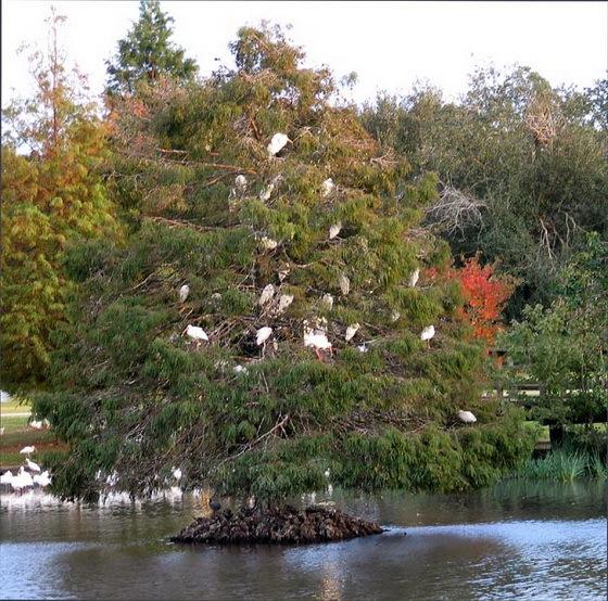 拉弗尼公园第9张图片
