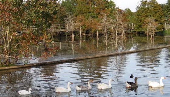 拉弗尼公园第11张图片