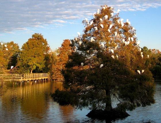 拉弗尼公园第27张图片