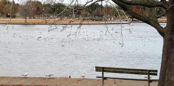 拉弗尼公园第29张图片