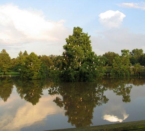 拉弗尼公园第57张图片