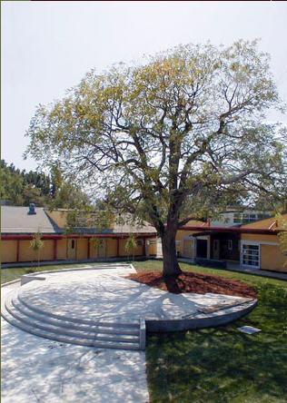 洛斯拉图斯学校第5张图片