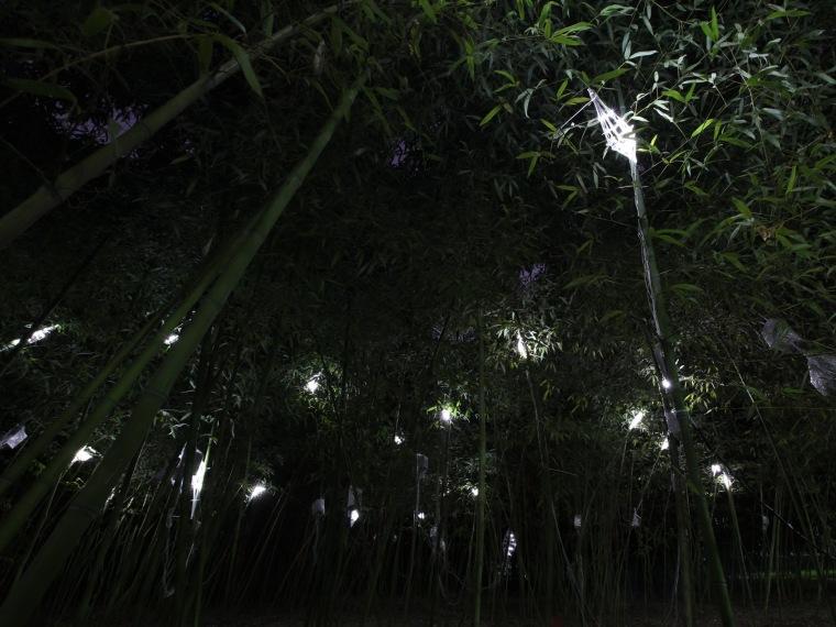 树精灵第1张图片