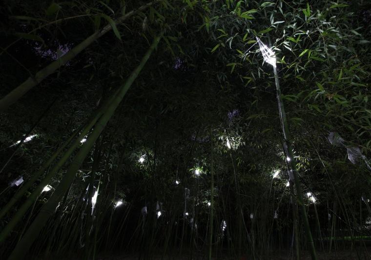 树精灵第2张图片