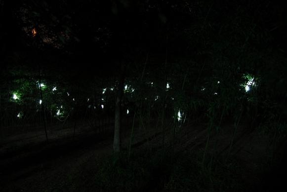 树精灵第3张图片