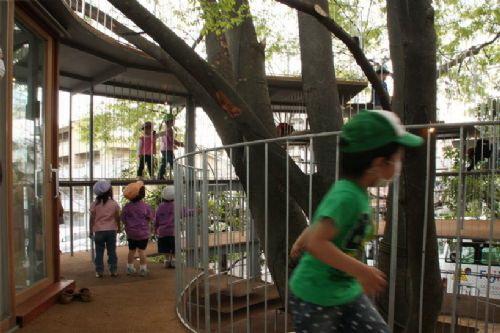 纤细的栏杆隐藏在树木的阴影之下-树屋幼儿园第10张图片