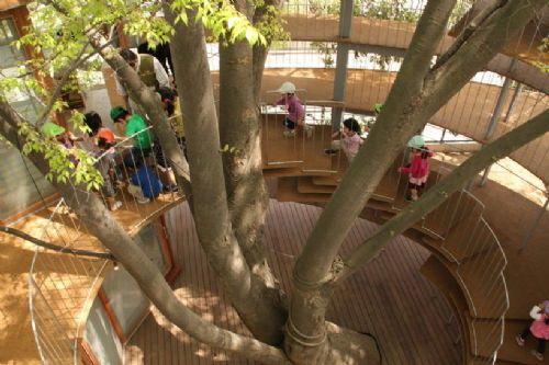 这座围绕大树建造的建筑物保留了-树屋幼儿园第13张图片