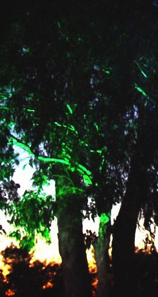 哈代公园第2张图片
