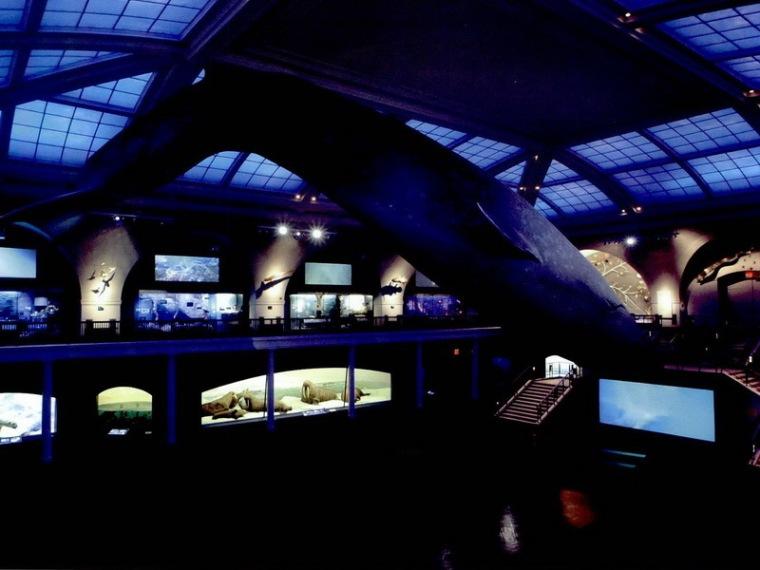 美国自然历史博物馆海洋生物大厅第1张图片