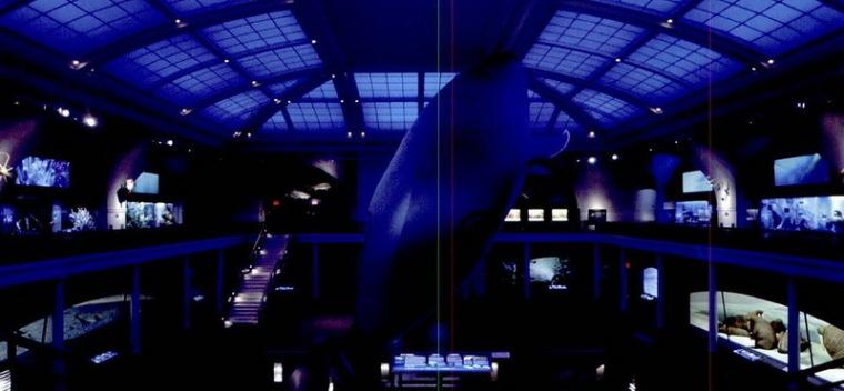 美国自然历史博物馆海洋生物大厅第3张图片