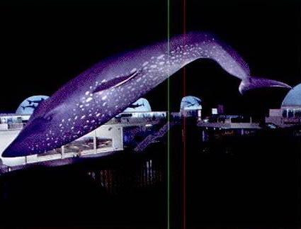美国自然历史博物馆海洋生物大厅第4张图片