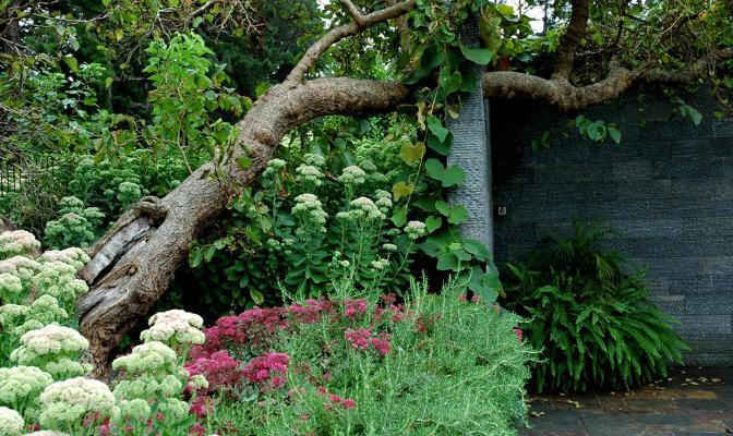 花之盛开花园第4张图片
