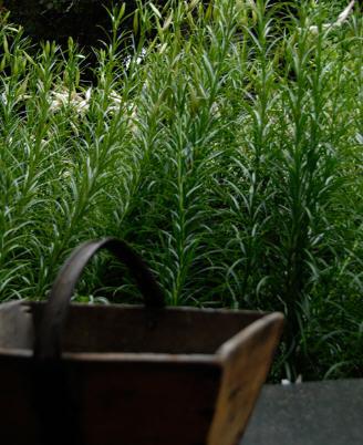 花之盛开花园第9张图片