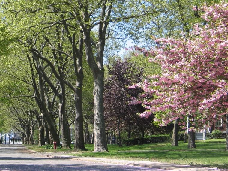 2012年ASLA奖分析与规划奖 总督岛公园及公共空间设计第1张图片