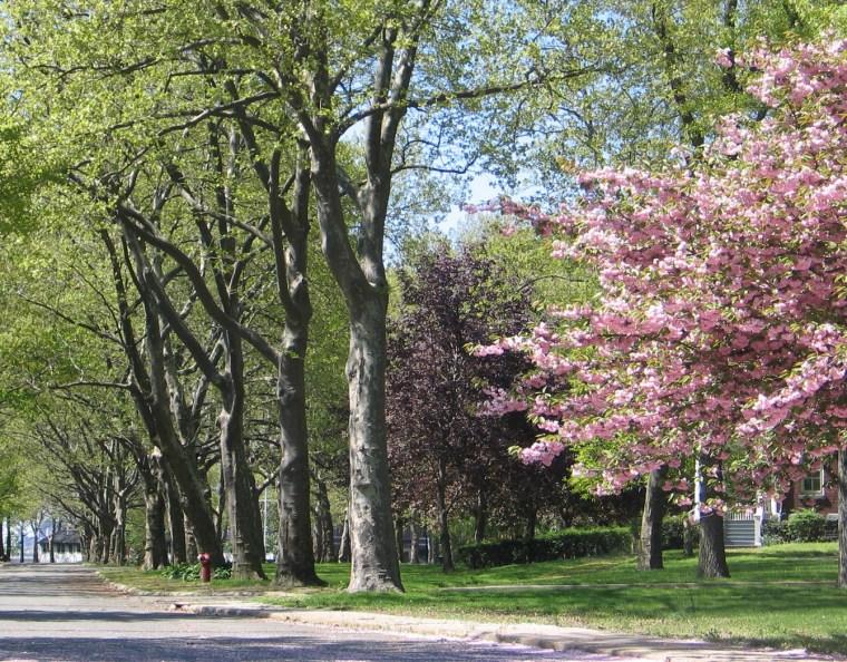 2012年ASLA奖分析与规划奖 总督岛公园及公共空间设计第9张图片