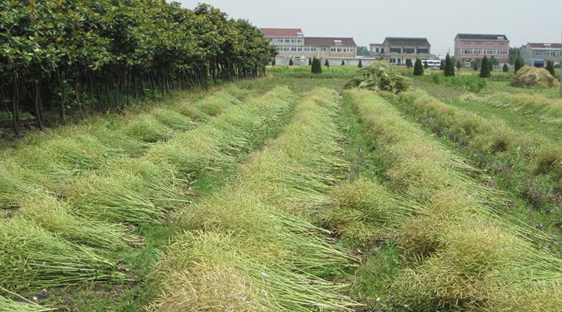 2012年ASLA奖分析与规划奖都市里的农业小镇_3