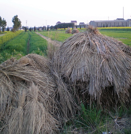 2012年ASLA奖分析与规划奖都市里的农业小镇_9